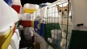 Airline Animal Transport Costs