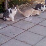 Spenden fuer Zypern Katzen